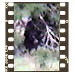 bigfoot video